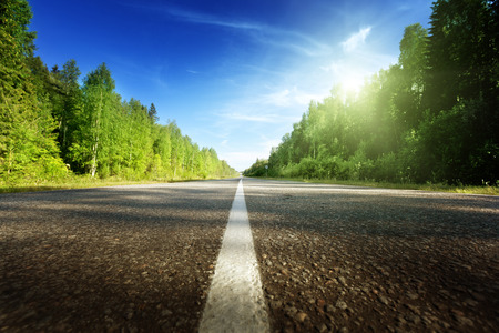 road in deep forest  photo