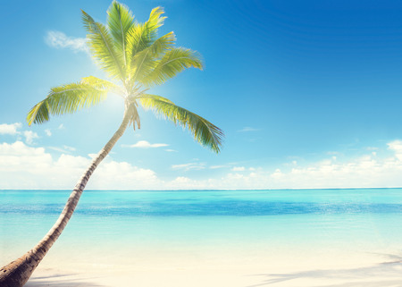 Caribbean sea and coconut palm photo