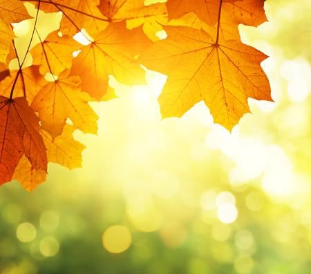 Autumn: las hojas en el otoño de los bosques