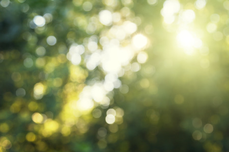 sun down: green bokeh in forest