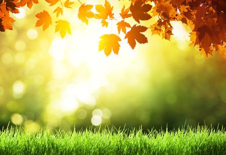 Bladeren in de herfst bos