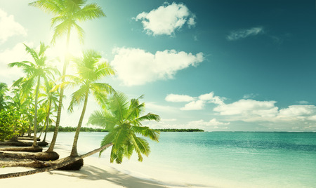 vacaciones en la playa: palmeras y playa del Caribe