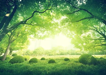 晴れた夏の公園で