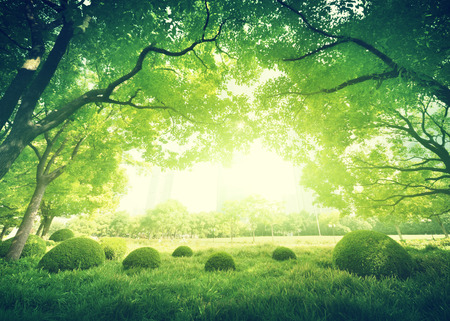 sonne: Sonnigen Tag im Sommer Park