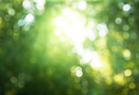 맑은 숲의 나뭇잎 스톡 콘텐츠