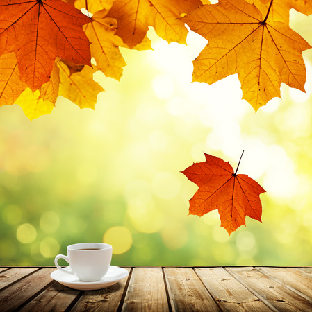 cup coffee and autumn forest photo