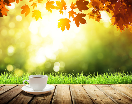 branches and leaves: cup coffee and autumn forest