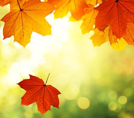 autumn forest: foglie in autunno bosco Archivio Fotografico