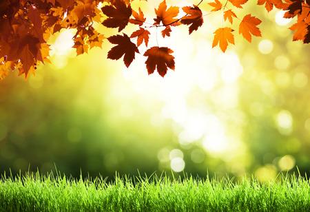 leaves in autumn forest Archivio Fotografico