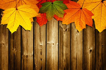 november: wooden background with autumn maple leaves Stock Photo