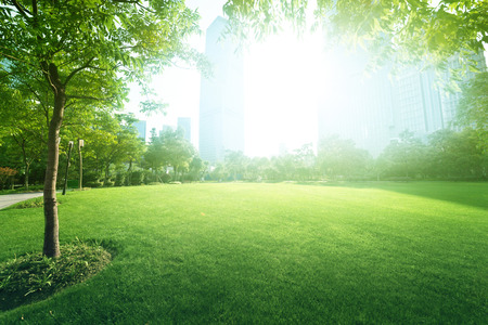 zonnige dag in het park Stockfoto
