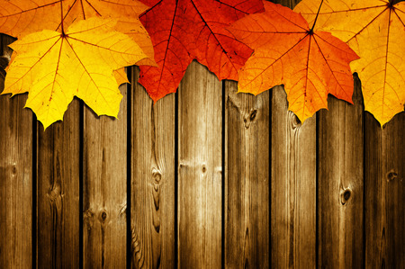 timber frame: wooden background with autumn maple leaves Stock Photo