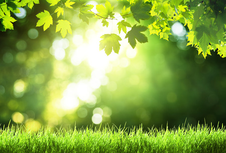 grass: sunny day in forest