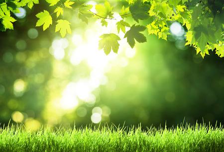 zonnige dag in het bos Stockfoto