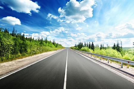 road in north forest Standard-Bild