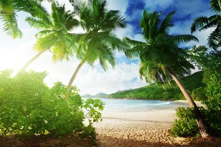 jungle leaves: sunset on the beach Takamaka, Mahe island, Seychelles