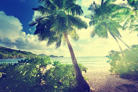 jungle green: sunset on the beach Takamaka, Mahe island, Seychelles