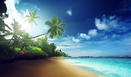 fruta tropical: playa en la puesta del sol en la isla Mahe en las Seychelles