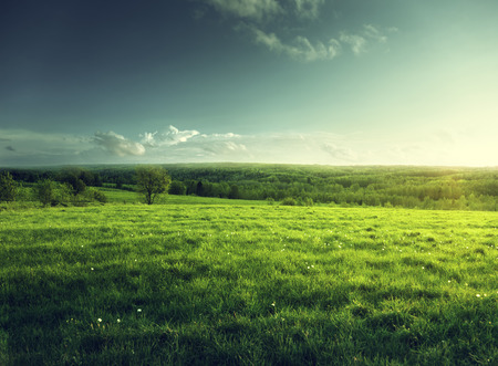 spring time: field of spring grass and forest  in sunset time Stock Photo