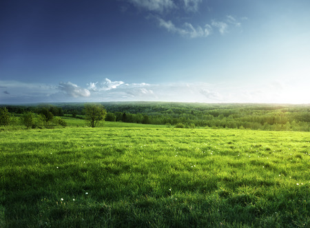 spring landscape: field of spring grass and forest  in sunset time Stock Photo
