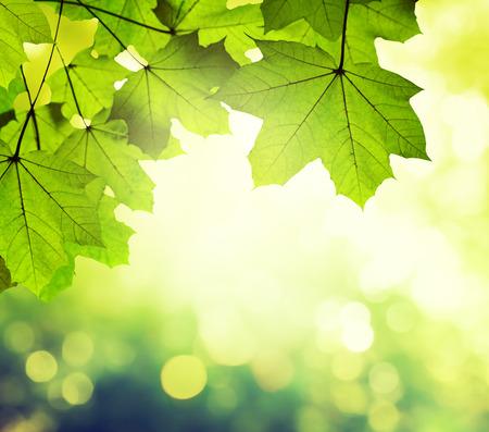 Dag in het zonnige bos Stockfoto - 36173308