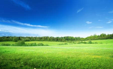 horizonte: campo de hierba y cielo perfecto Foto de archivo