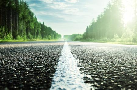 ensolarado: estrada na floresta ensolarado (DOF raso)