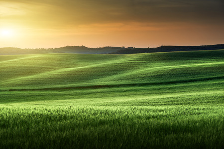 agriculture landscape: tuscany sunset, Italy