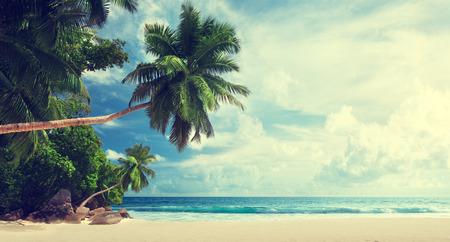 palmier: plage tropicale