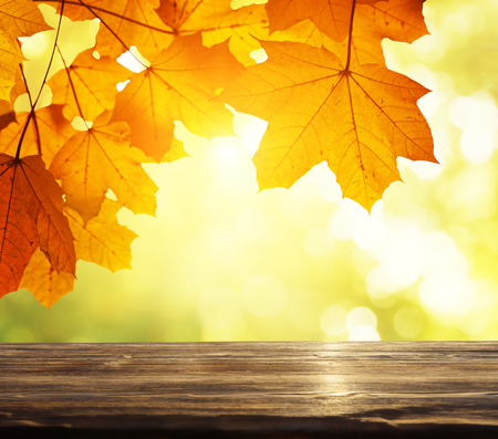 table in autumn forest