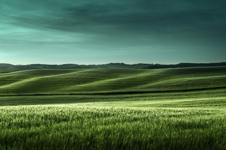 grass and sky: tuscany sunset, Italy