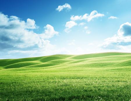 perfecto campo de hierba de la primavera Foto de archivo