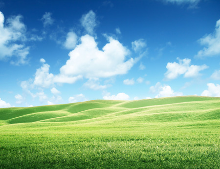 sky and grass: field of grass and perfect sky