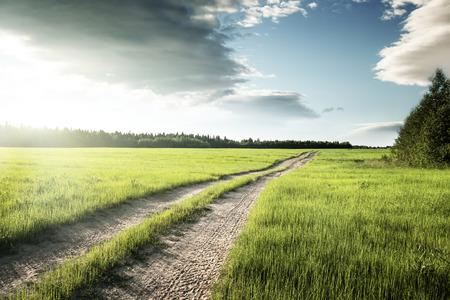campo de flores: Camino de tierra y campo de hierba de la primavera