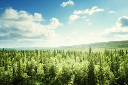lasu w słoneczny dzień