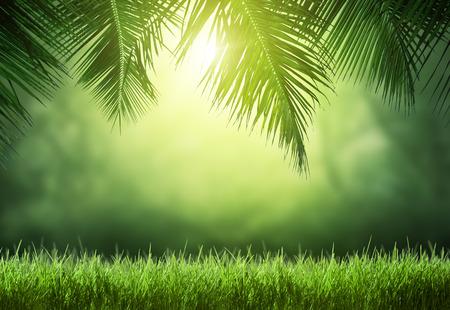 Tropisch bos Stockfoto - 51293869