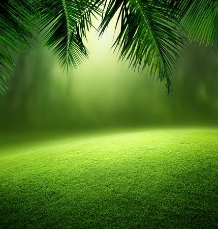 coconut: rừng nhiệt đới