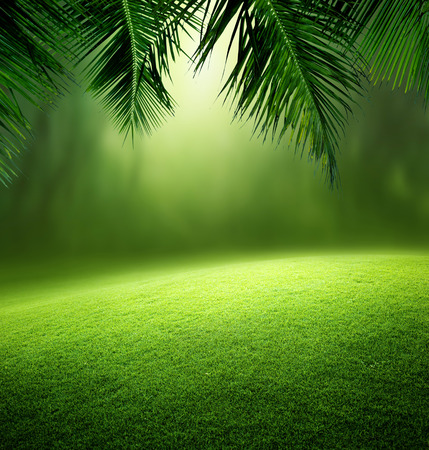 jungle foliage: tropical forest