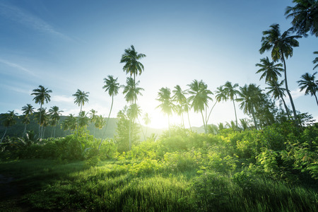 zachód słońca w dżungli, Seszele