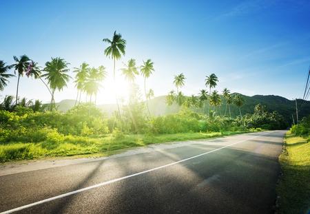 Puste drogi w dżungli wysp Seszeli