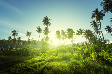 seychelles: sunset in jungle, seychelles