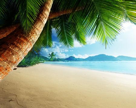 palm: sunset on beach Anse Takamaka, Mahe island, Seychelles Stock Photo