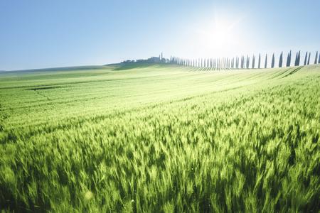 Green field of wheat and farm house, Tuscany, Italy Stock Photo
