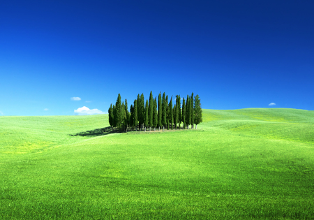 Group of cypresses and sunny day, Tuscany, Italy Stock Photo