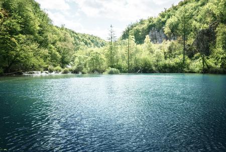 크로아티아의 숲에있는 호수 스톡 콘텐츠