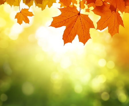 leaves in autumn forest 스톡 콘텐츠