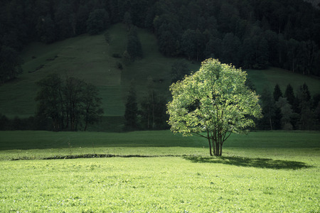 tree on mountain field, Lauterbrunnen, Switzerland Stock Photo