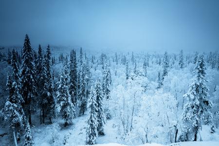 forest in winter season