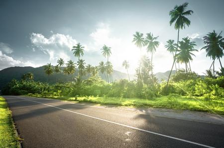 empty road in jungle of Seychelles islands Banco de Imagens