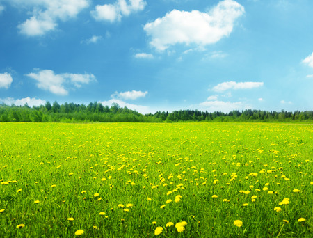 field of spring flowers and perfect sky Archivio Fotografico - 100939041